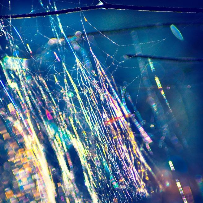 Spidernet 9